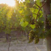 """""""Es wird a Wein sein, und wir wean nimmer sein"""" – Wein, Weib und Gesang: kulinarischer Grätzelspaziergang von Nußdorf nach Grinzing"""